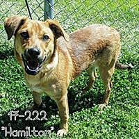 Mixed Breed (Medium) Mix Dog for adoption in Cannelton, Indiana - Hamilton