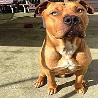 Adopt A Pet :: DILLINGER - Alameda, CA