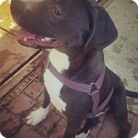Adopt A Pet :: Skipper - Los Banos, CA