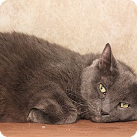 Adopt A Pet :: Seymour - Colorado Springs, CO