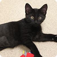 Adopt A Pet :: Ann Bonnie - Naperville, IL