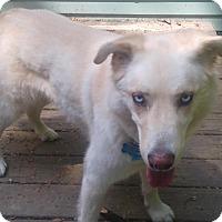 Adopt A Pet :: SHADOW - bath, ME