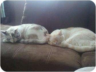 Domestic Mediumhair Cat for adoption in Yuba City, California - 2 Cats: 1 Male, 1 Girl