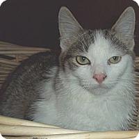 Adopt A Pet :: Arnie - Brookville, IN