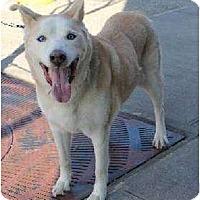 Adopt A Pet :: Millie - Huntington Station, NY