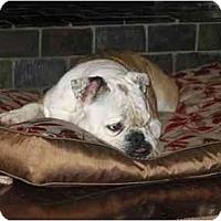 Adopt A Pet :: Shelby - Winder, GA