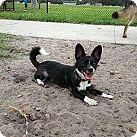 Adopt A Pet :: Taquito - Orlando, FL