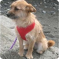 Adopt A Pet :: Destiny - Seattle, WA