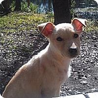 Adopt A Pet :: Luz - Kingwood, TX