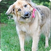 Adopt A Pet :: Bella - Hilliard, OH