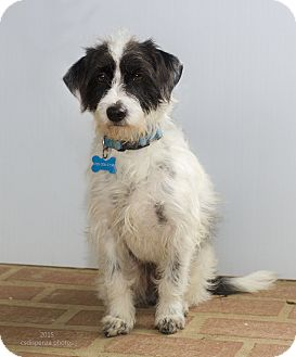 Terrier (Unknown Type, Small) Mix Dog for adoption in Baton Rouge, Louisiana - Rudy