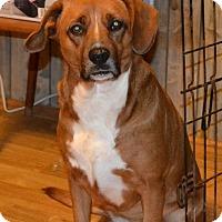 Adopt A Pet :: Annie - Bakersville, NC