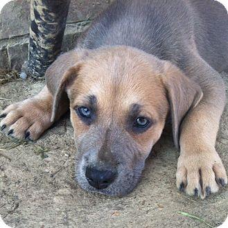 Labrador Retriever Mix Puppy for adoption in Greenfield, Wisconsin - Emma