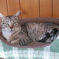 Adopt A Pet :: SANDRA - San Pablo, CA