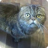 Adopt A Pet :: Merida - Davis, CA
