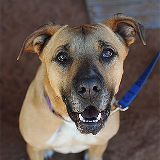 Shepherd (Unknown Type) Dog for adoption in Kanab, Utah - Alice