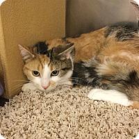 Adopt A Pet :: Ruby -Adoption Pending! - Colmar, PA