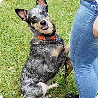 Adopt A Pet :: Libby - Abbeville, LA