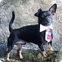 Adopt A Pet :: Thorn - Dalton, GA