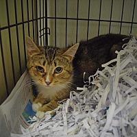 Adopt A Pet :: Reva - Pottsville, PA