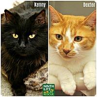 Adopt A Pet :: Dexter & Kenny - Oakville, ON