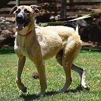 Adopt A Pet :: Ralphie - Penngrove, CA