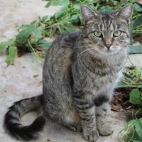 Adopt A Pet :: Leo - Robinson, IL