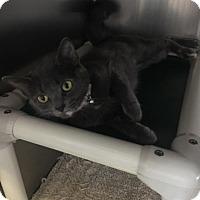 Adopt A Pet :: Luisa - Stanton, MI