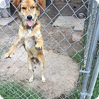 Adopt A Pet :: Willie - Tenafly, NJ
