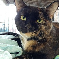 Adopt A Pet :: Millicent (Millie) - Columbus, OH