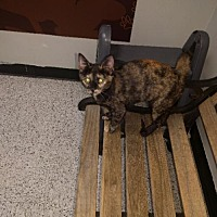 Adopt A Pet :: Deidre - Littleton, CO