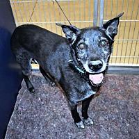 Adopt A Pet :: Duke - San Jacinto, CA