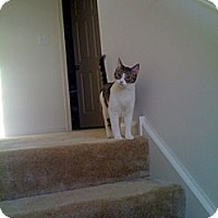 Adopt A Pet :: Pepper - West Dundee, IL