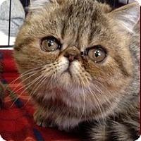 Adopt A Pet :: Suzette - Beverly Hills, CA