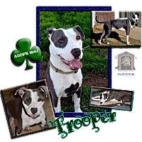 Adopt A Pet :: Trooper - Colleyville, TX