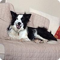 Adopt A Pet :: Fritz - Denver, CO