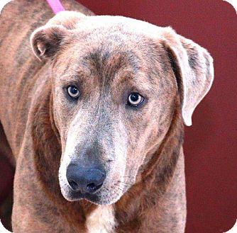 Mastiff Mix Dog for adoption in McDonough, Georgia - Astro