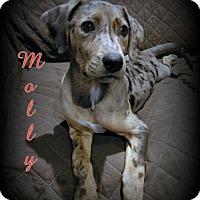 Adopt A Pet :: Molly - Denver, NC