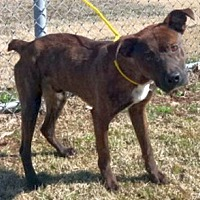 Adopt A Pet :: Jace - Olive Branch, MS