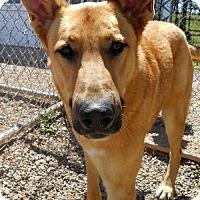 Adopt A Pet :: Chief - Oskaloosa, IA