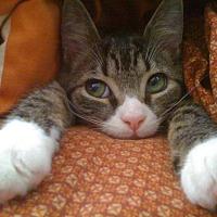 Adopt A Pet :: Toodaloo - Monroe, NC