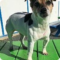 Adopt A Pet :: Baby - Queenstown, MD