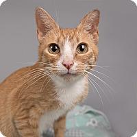 Adopt A Pet :: Julia - Wilmington, DE