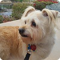 Adopt A Pet :: BIXBY - Palm Desert, CA