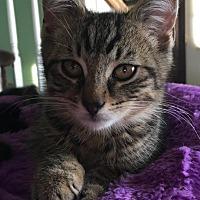Adopt A Pet :: River - Toms River, NJ