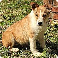 Adopt A Pet :: Egan - Brattleboro, VT