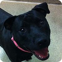 Adopt A Pet :: Fate - Gilbert, AZ