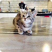 Adopt A Pet :: Hermoine - Edmonton, AB