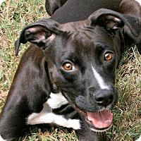 Adopt A Pet :: Shadow - Lufkin, TX