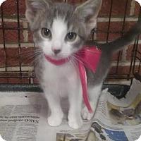 Adopt A Pet :: Pearl - Harrisburg, NC